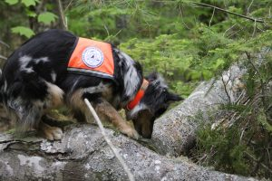 Dog detecting, Science Dogs of New England