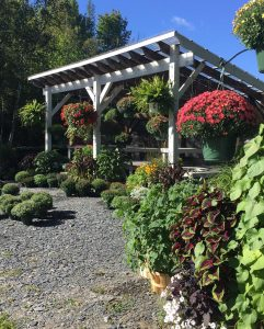 Display of Trailside Gardens flowers within a canopy